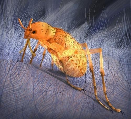 giant-flea