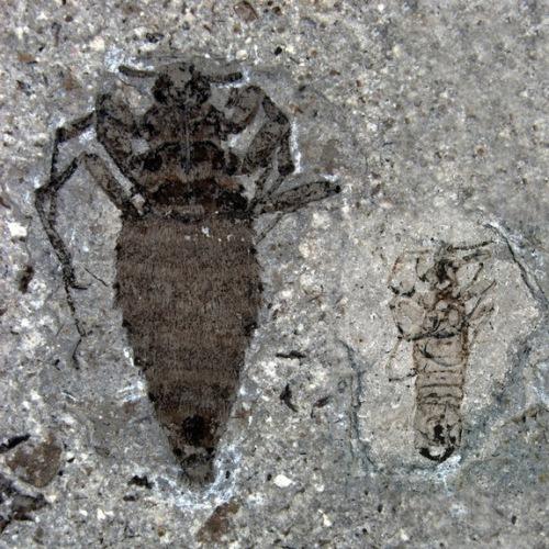 jurassic-fleas-120229