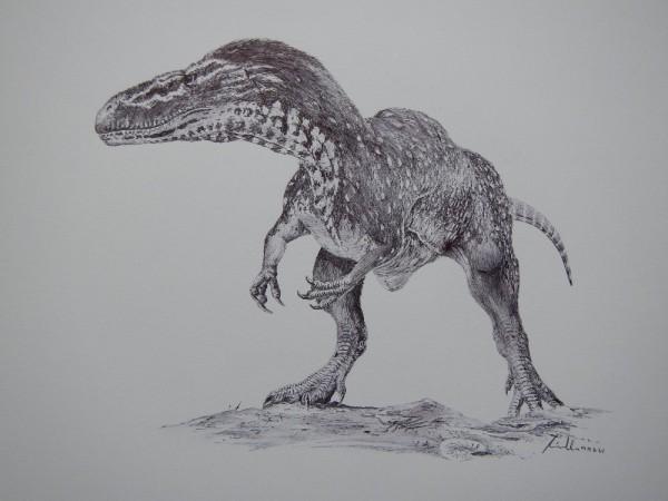 Torvosaurus orliciensis